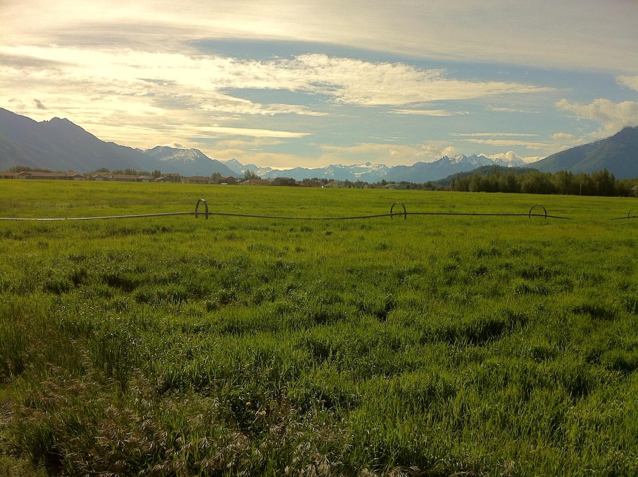The Alaska Farmland Trust saving farmland in the Matanuska Valley, protected a 40 acre hayfield near downtown Palmer, Ak