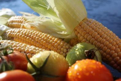 Growing Corn in Alaska is not for the faint of heart.